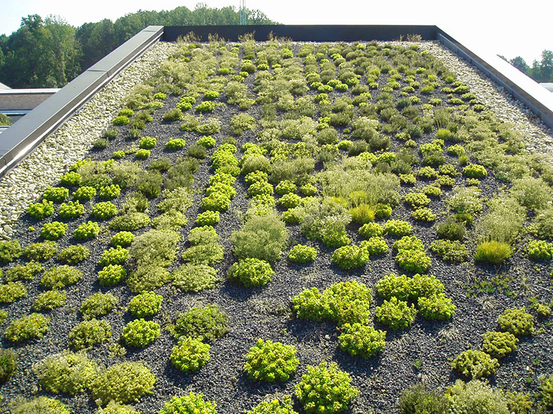 post_greenroof
